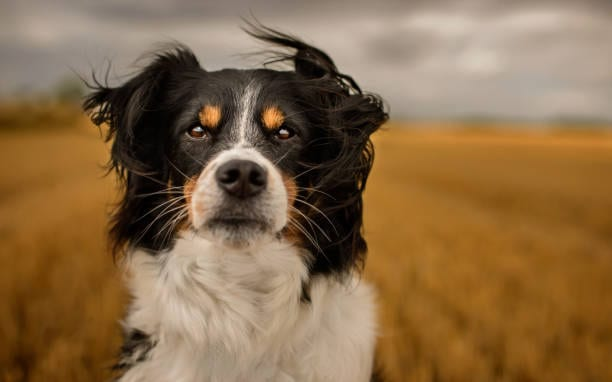 EXCLUSIVE: Mining leadership – it's a dog's world